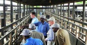 Kenya - Nairobi Betriebsführung