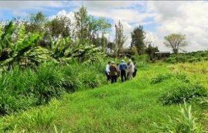 Kenya - Pflanzen kreuzen